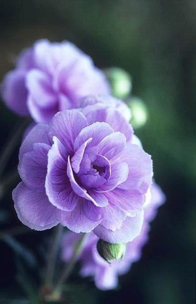 belle image en violet