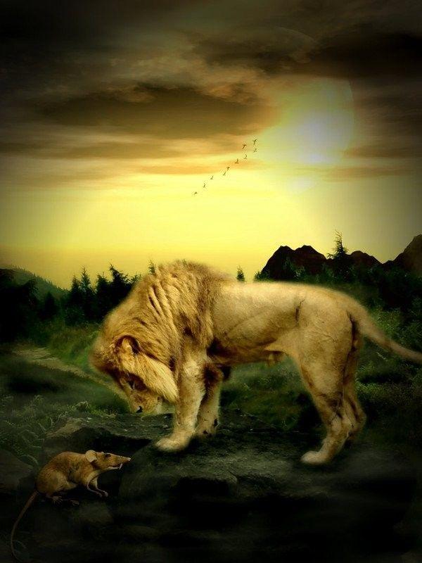Bien connu belles images animaux lion lionne KT45