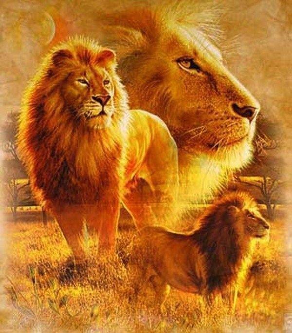 Célèbre belles images animaux lion lionne VG67