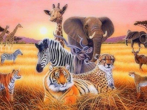 Belles images animaux par plusieurs - Image d animaux gratuit ...