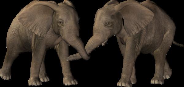 Free elephant tube