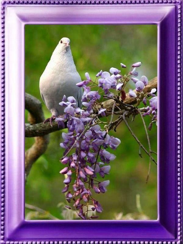 http://francheska45.f.r.pic.centerblog.net/o/ba19be31.jpg